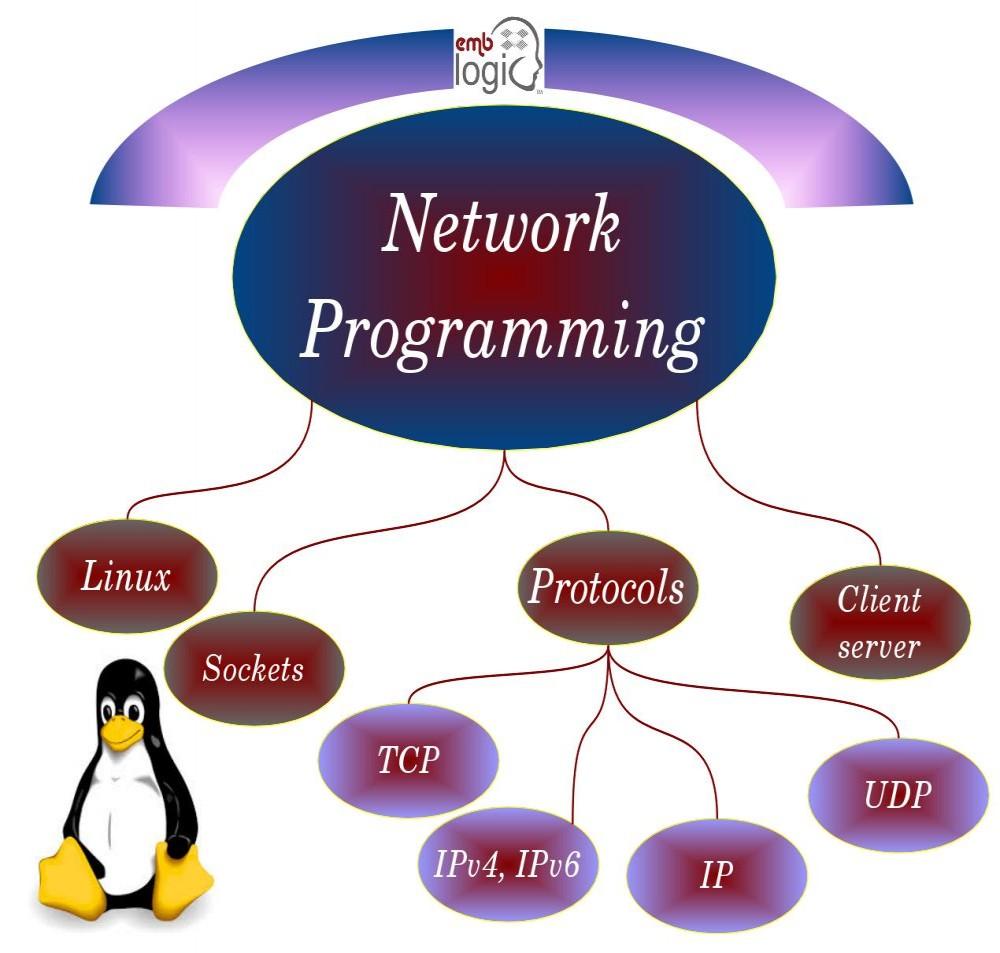 Dissertation Networking